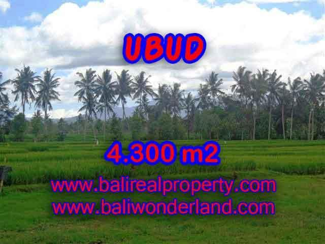 Fantastic Land for sale in Bali, Paddy and mountain view on river side in Ubud Center– TJUB370