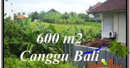 Exotic PROPERTY LAND SALE IN Canggu Brawa BALI TJCG206