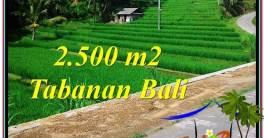 Beautiful PROPERTY 2,500 m2 LAND IN Tabanan Penebel FOR SALE TJTB305
