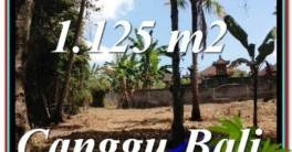 Beautiful LAND IN Canggu Pererenan BALI FOR SALE TJCG208