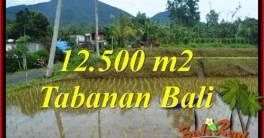 Exotic PROPERTY LAND FOR SALE IN Tabanan Penebel BALI TJTB317