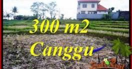 Affordable PROPERTY CANGGU BALI 300 m2 LAND FOR SALE TJCG230