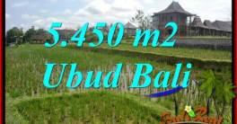Beautiful Property Land in Ubud Bali for sale TJUB688