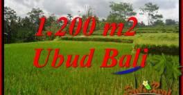 FOR sale Affordable Property 1,200 m2 Land in Ubud Tegalalang TJUB693
