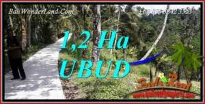 Exotic 12,000 m2 Land for sale in Ubud Tegalalang TJUB740