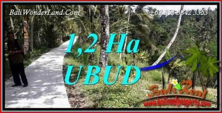 FOR sale Affordable 12,000 m2 Land in Ubud Bali TJUB740