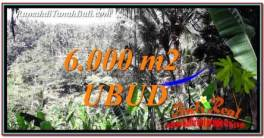 Magnificent PROPERTY 6,000 m2 LAND FOR SALE IN Ubud Payangan BALI TJUB750