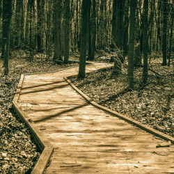 Commercial Wood Coatings Restore Wooden Walking Trail In Woods