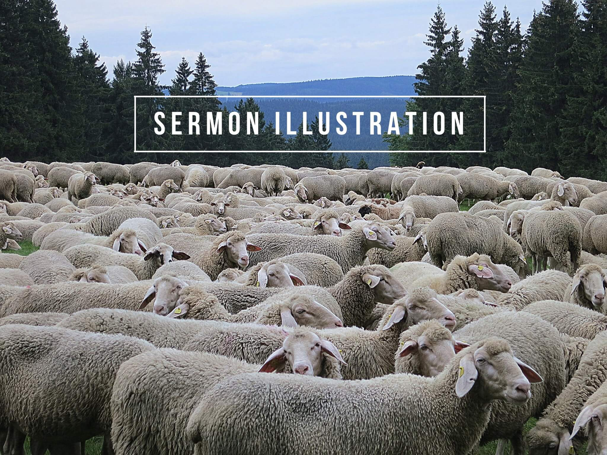 The Shepherd's Voice (Sermon Illustration) - Pro Preacher