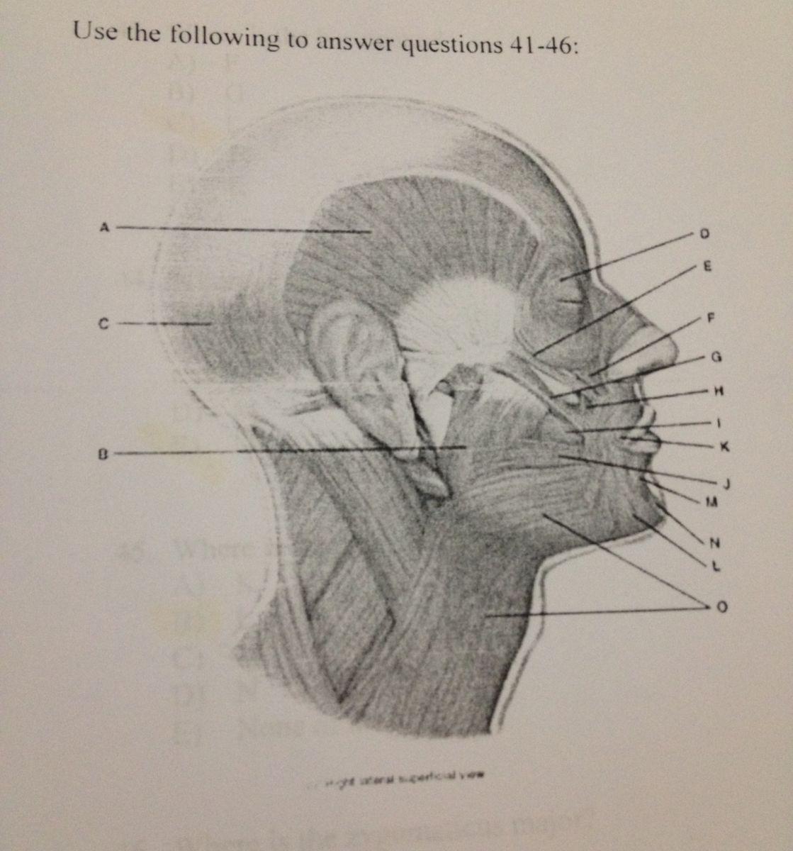 Anatomy Amp Physiology 1 Exam 3