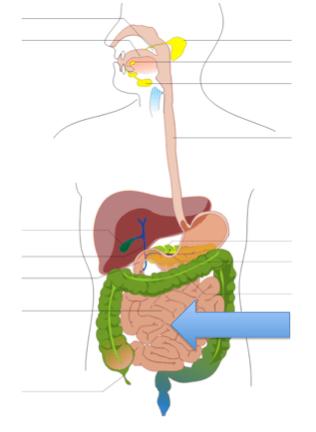 Digestive & Urinary Systems Test B - ProProfs Quiz