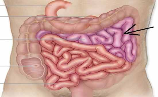 Anatomy And Physiology: Digestive, Urinary, And ...