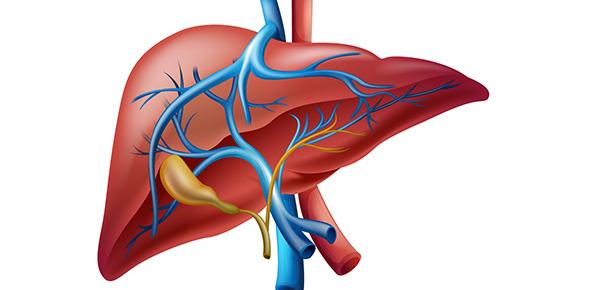 Liver Quizzes, Liver Trivia, Liver Questions