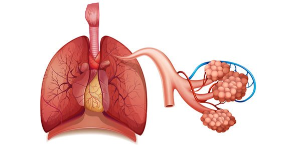 Respiratory system Quizzes, Respiratory system Trivia, Respiratory system Questions