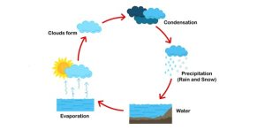 The Water Cycle Quiz  ProProfs Quiz