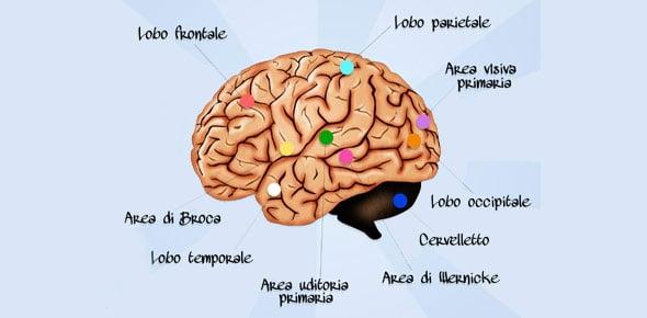 Brain Quizzes, Brain Trivia, Brain Questions