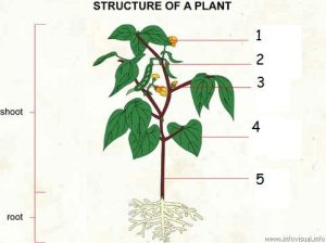 Plant Biology  5th Grade  ProProfs Quiz
