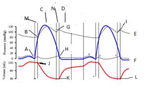 Cardiac Cycle Quiz  ProProfs Quiz