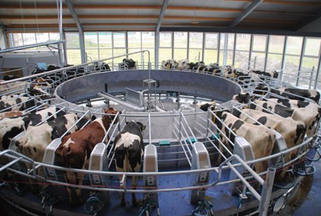 Wageningen University's Dairy Campus
