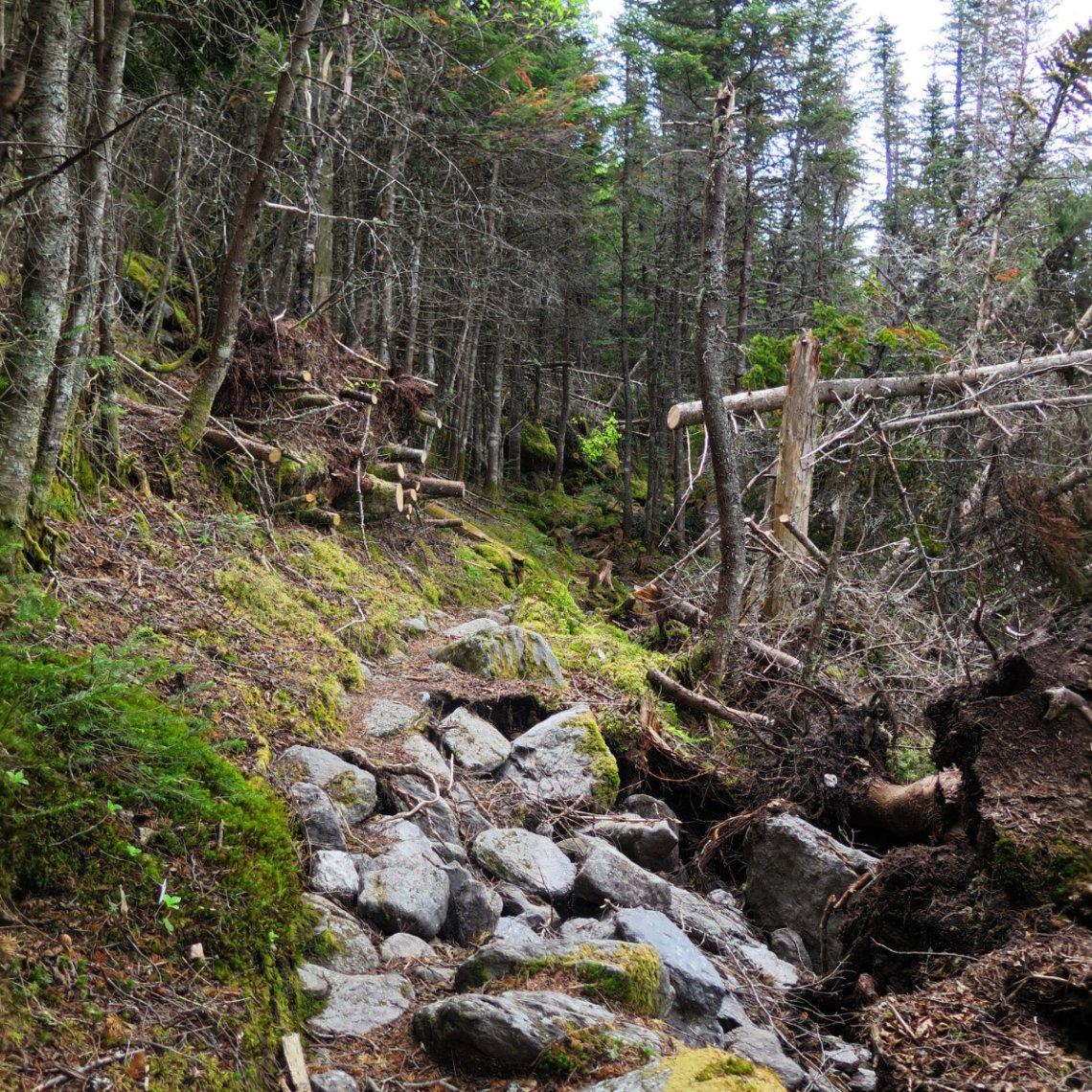 20180616-Trail-Work