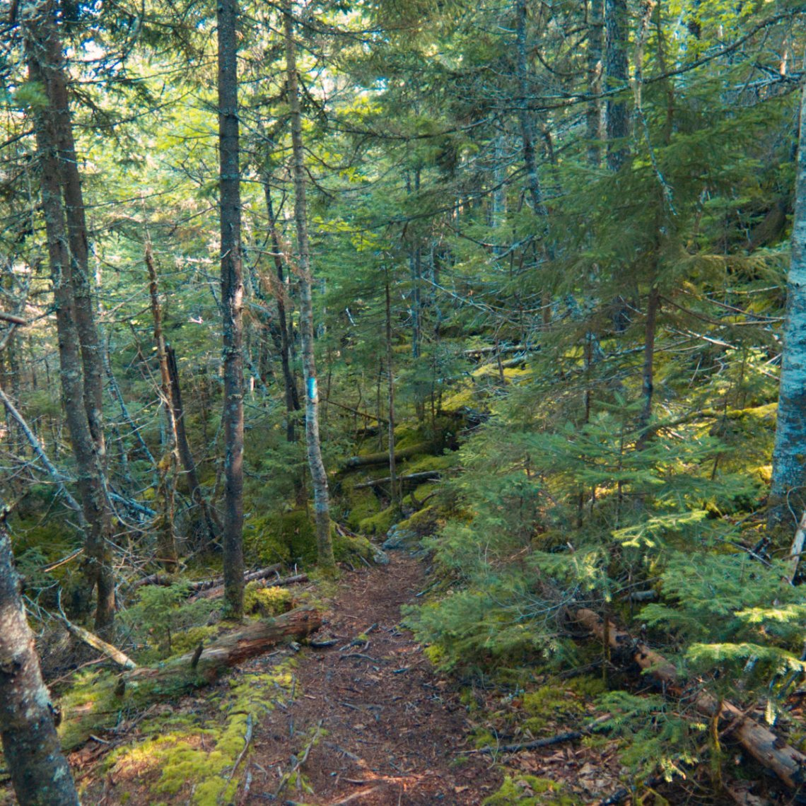 20180816-Abraham-ME-Trail-Moss