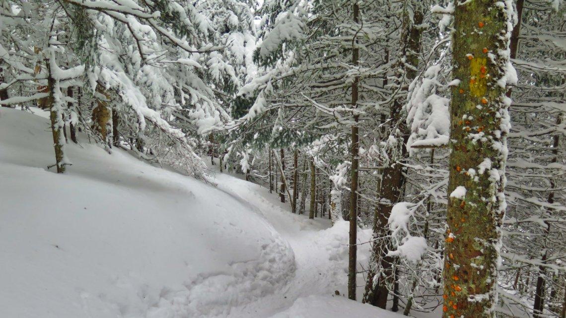 Waumbek-Trail-Downhill-20190202