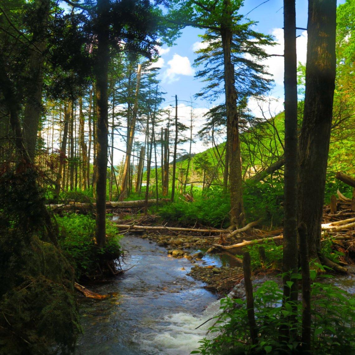 Moosilauke-Beaver-Brook-Pond-20190627