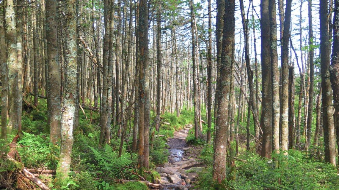 Moosilauke-Trail-20190627
