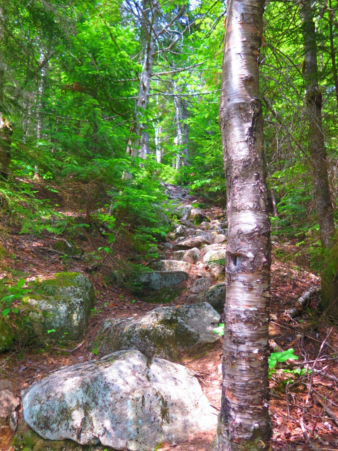 Steep-Trail-South-Turner-BSP-20190705