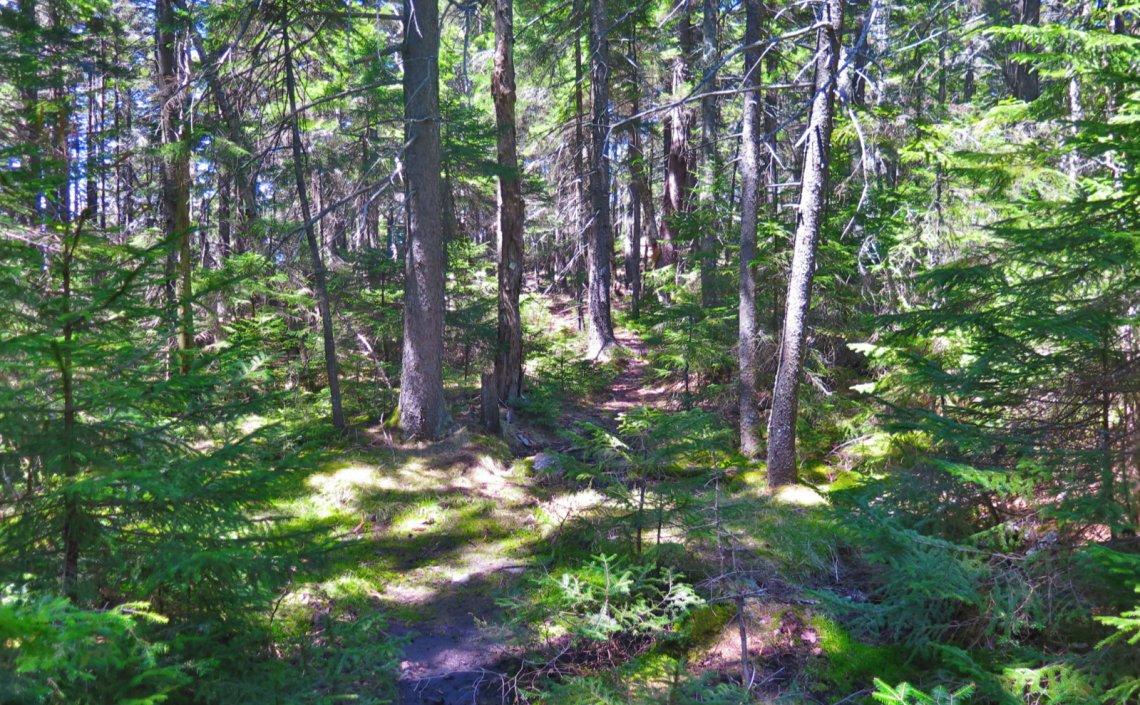 06-Mossy-Trail-Ragged-20200520