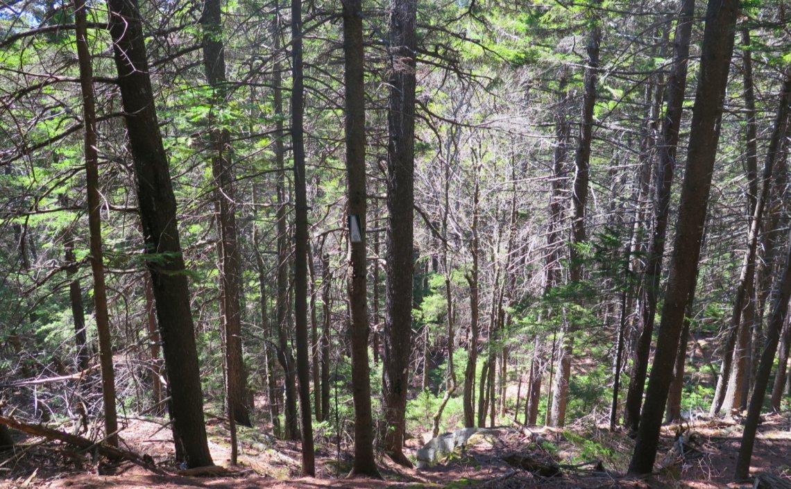 07-Steep-Down-Trail-Ragged-20200520