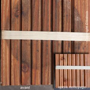 Tache de moisissure sur bois