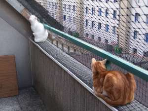 chat_balcon