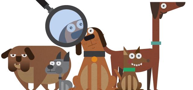 Como Elegir el Perro Perfecto Para Ti