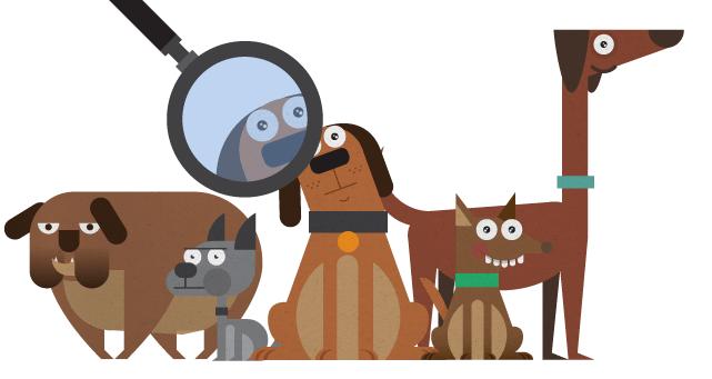 Razas-de-perros
