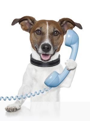 Contacto protectora doggy