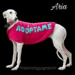 Aria – Galga abandonada por un cazador