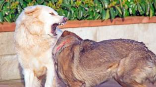 Get Involved. Have your say on dog on dog attacks! 1