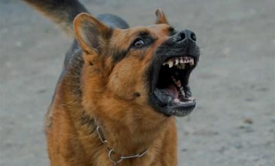 Attention chien méchant