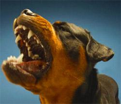Une bombe OC peut stopper ce chien !