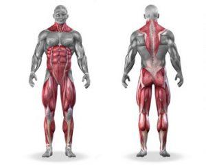 Så mange muskler i kroppen trener markløft