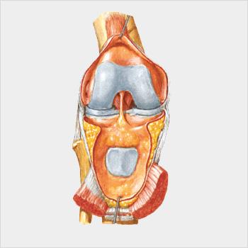 https://i2.wp.com/www.protesianca.com/wp-content/uploads/2015/11/ginocchio_grigio.jpg?fit=350%2C350