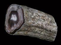 Okamenelo drevo3