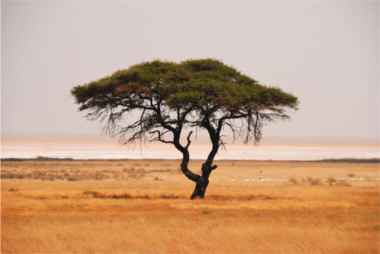 Namibia © Hans-Jürgen Spengemann_pixelio.de