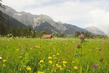 alpenkräutertage heilkräuter innsbruck wandern kräuterpädagogen