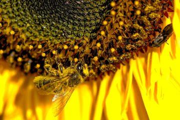 Welttag der Bienen