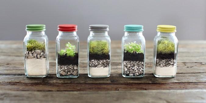 Target spice jar terrariums
