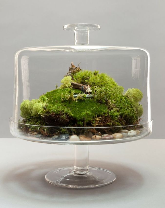 moss terrarium in a cake stand with lid