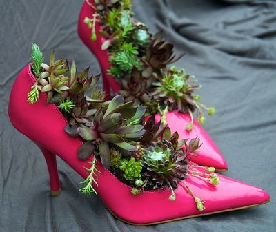 succulent plants in a pink high heel shoe