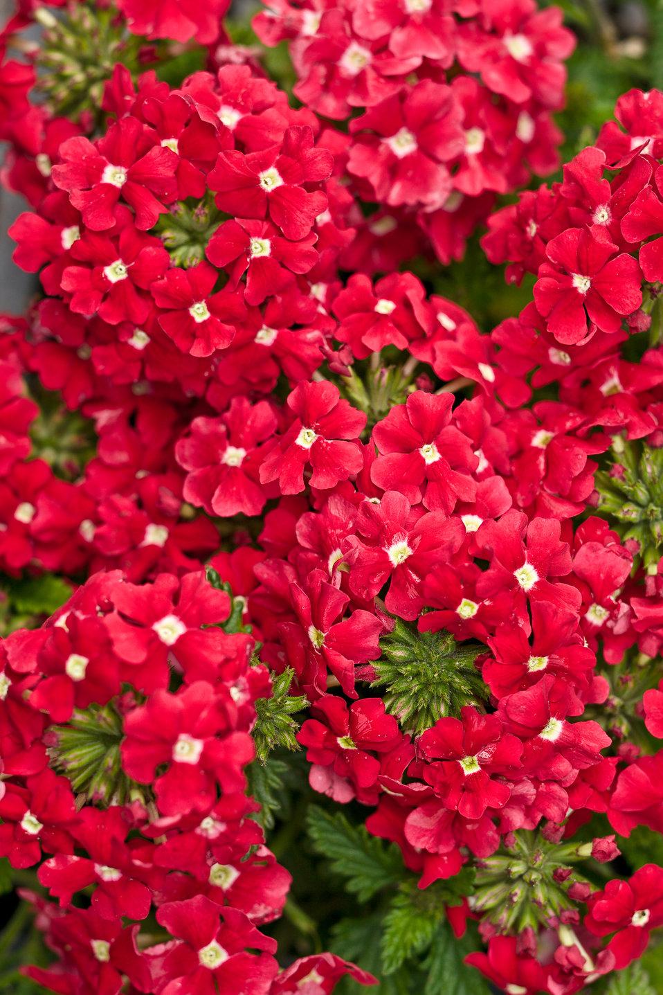 Backyard Plants And Flowers